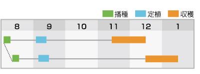ゴールド福春 作型表