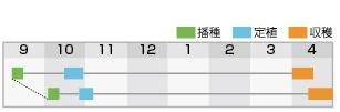 晩緑105 作型表