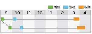 晩緑99w 作型表