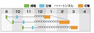 プラノ 作型表