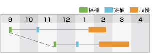 ヨシダ 作型表