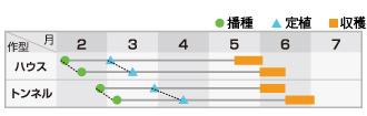 クレオパトラ作型表