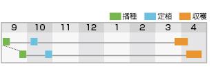 晩緑100作型表